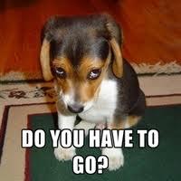 Sad Dog_1